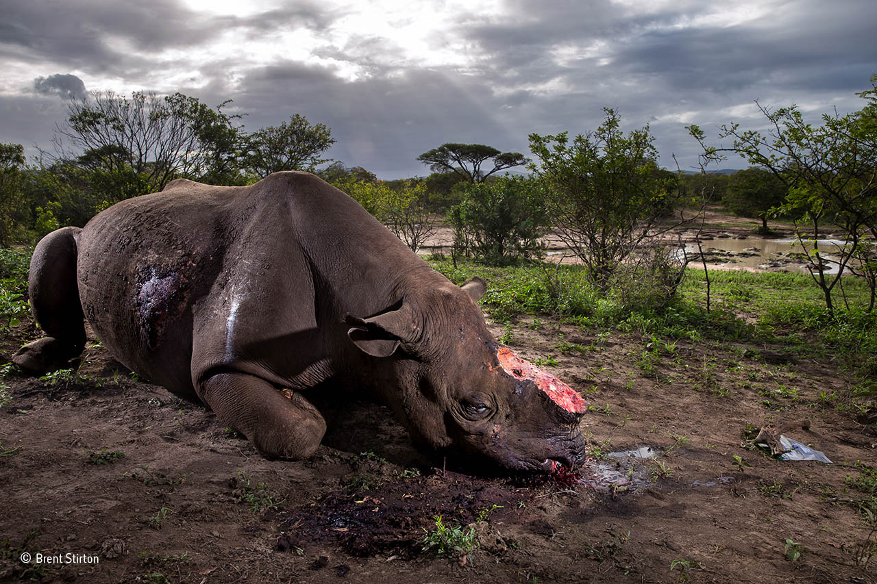 Ganador Wildlife Brent Stirton
