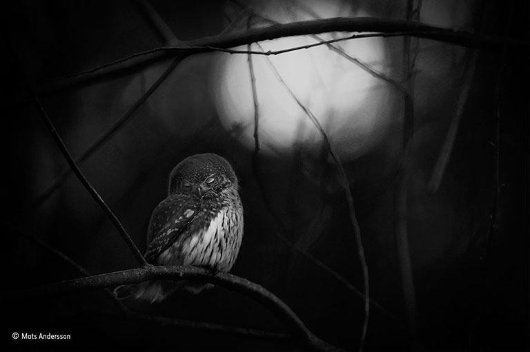 mats-andersson_wildlife-photographer-of-the-year-black-and-white-winner