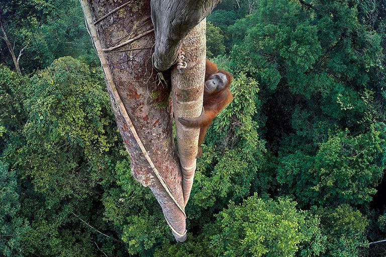 tim-laman_wildlife-photographer-of-the-year_-grand-title-winner