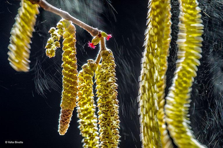 valter-binotto_wildlife-photographer-of-the-year_-plants-winner