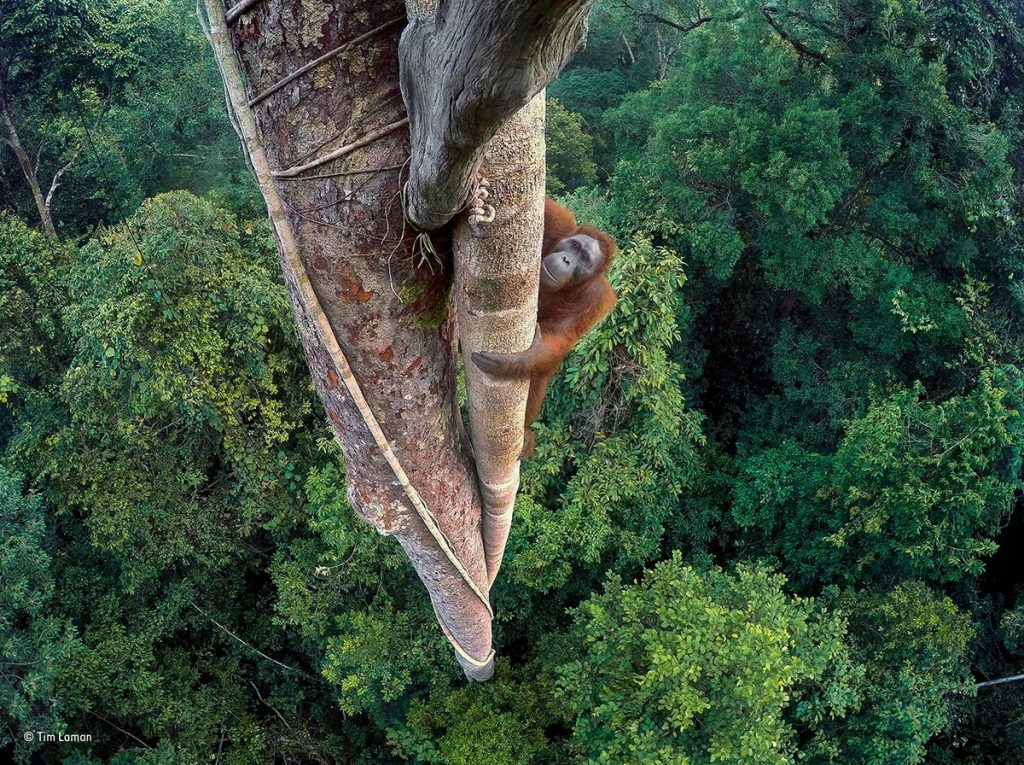 Tim Laman Wildlife Photographer of the Year Madrid